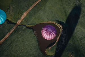 Mansfield Private Balloon Flight for 8 with Champagne Breakfast