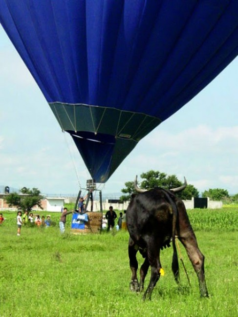 Q & A with Nick Brau – Chief Pilot, Global Ballooning Australia - Global Ballooning