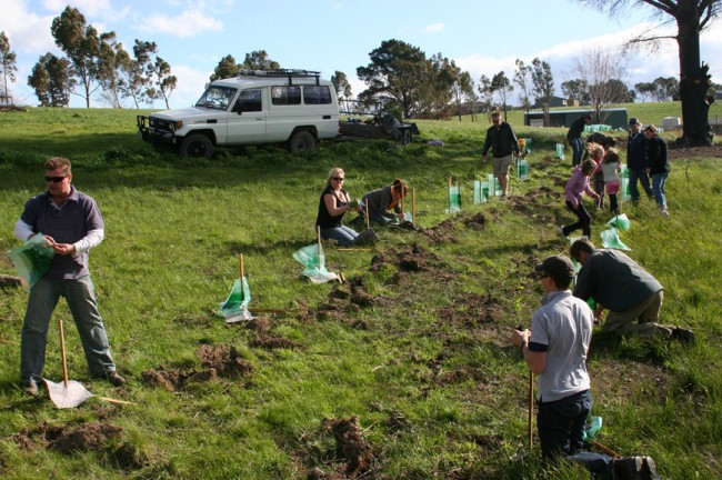 Global Tree Planting Day