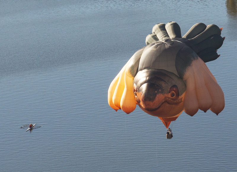 The Skywhale - one of our most exciting projects yet!